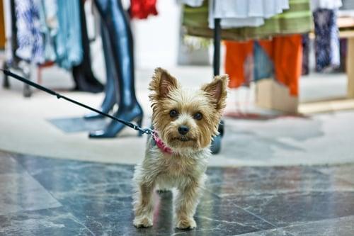 iStock-174258293-doginstore